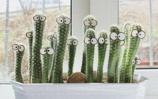 хочу кактус