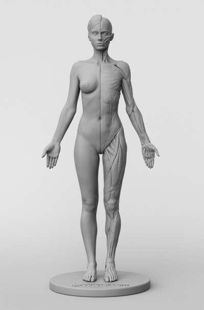 3dtotal Anatomy: female figure