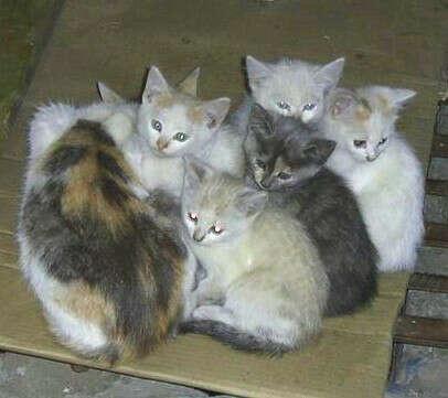 Хочу помочь бездомным кошкам
