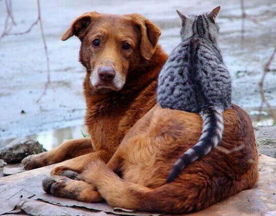 построить приют для бездомных животных