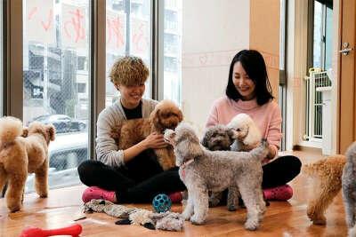 Побывать в собачьем кафе в Токио