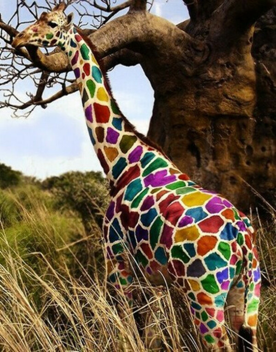 жирафа который ест радугу и даёт skittles