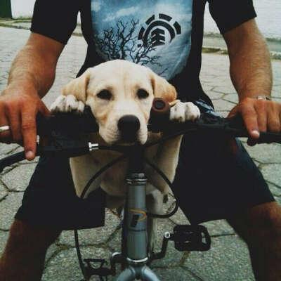 Завести собаку