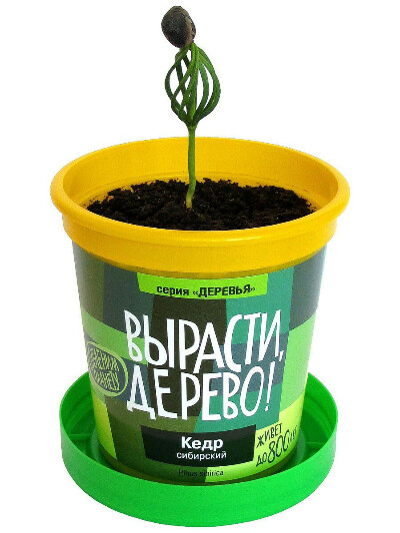 """Набор для выращивания """"Кедр сибирский"""", Вырасти, Дерево!"""