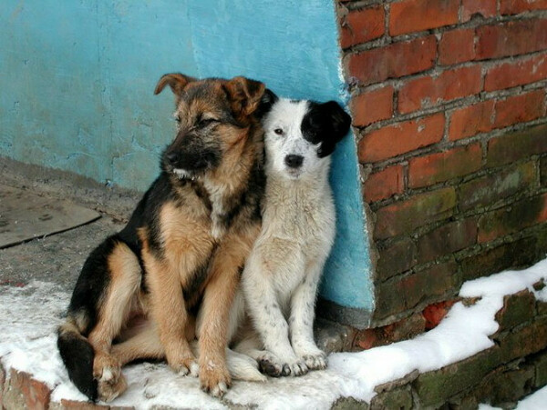 Чтобы все бездомные животные, больше не мерзли и не голодали!