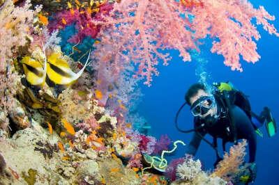 Подводное плавание с аквалангом на открытой воде