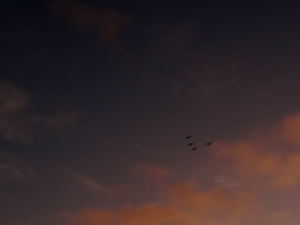 Полететь на параплане  над Рио-де-Жанейро