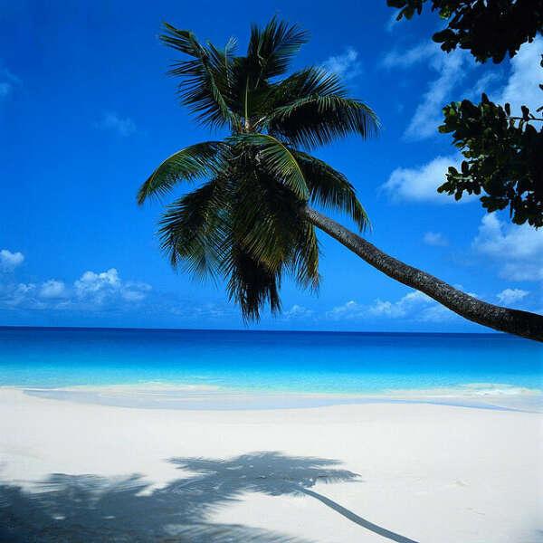 Поехать в Канкун