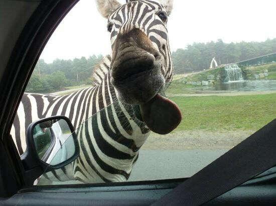 Посетить сафари парк Serengeti-Park Hodenhagen