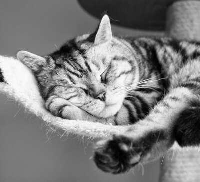 Выспаться.