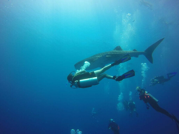 Boutique Beach All-inclusive Diving Hotel