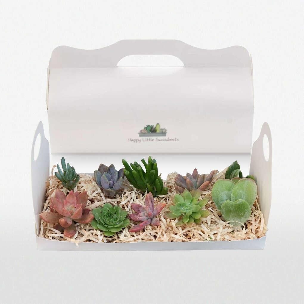 Succulent Cuttings Gift Box