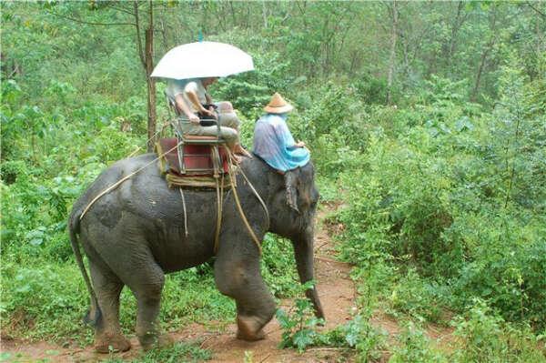 Покататься на слоне