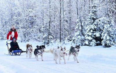 Прокатиться на собачьих упряжках