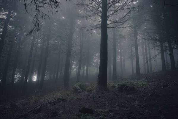 погулять в туманном лесу