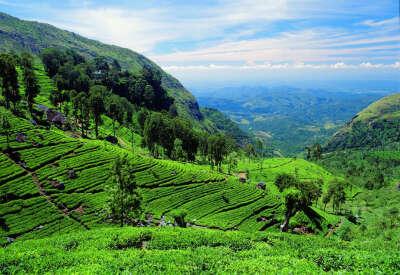 Шри-Ланка !
