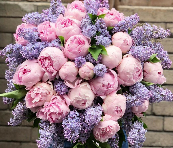 Цветы Без Повода
