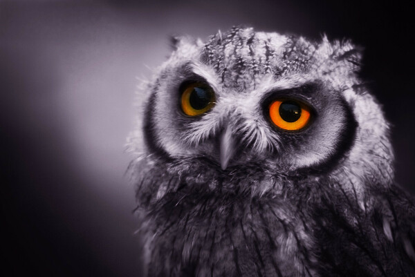Хочу погладить сову;-)
