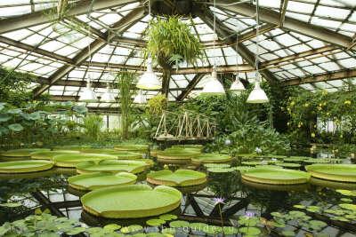 Погулять в Ботаническом саду