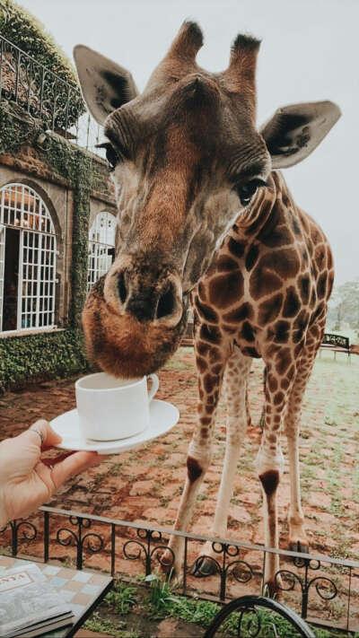 Giraffe Manor