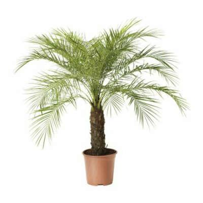большой цветок/пальма