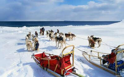 Покататься зимой на собачьих упряжках