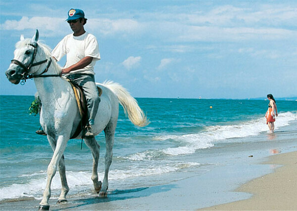 Хочу прокатить на лошади по пляжу