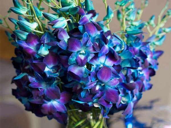 Орхидея (НЕ фаленопсис)