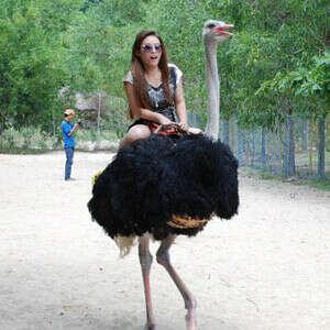 покататься на страусе.