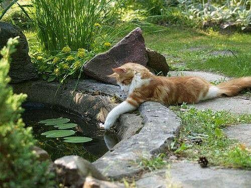 хочу свой сад