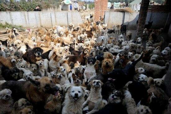 Помогать животным