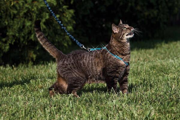 выгулять кота