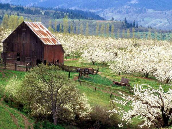 ...дом с яблоневым садом.