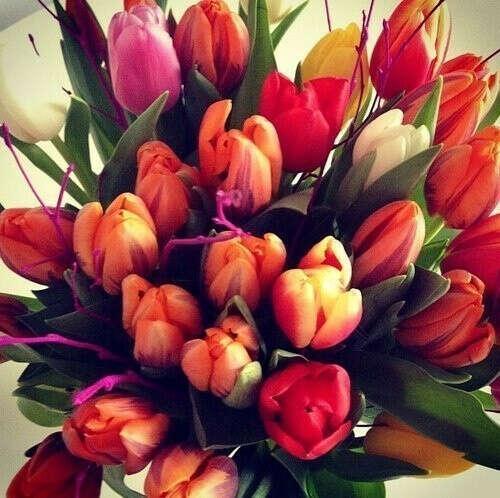 тюльпаны :Р