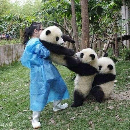 Потрогать панду