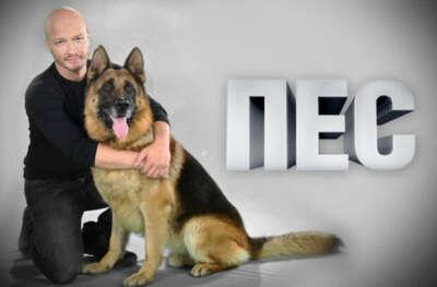 """Смотреть втроем любимый сериал """"Пёс"""""""