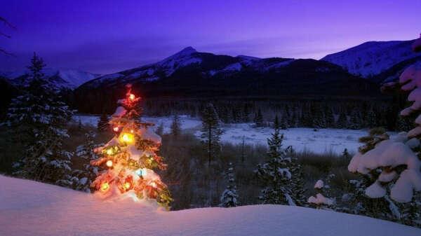Украсить огнями живую елку на Новый год