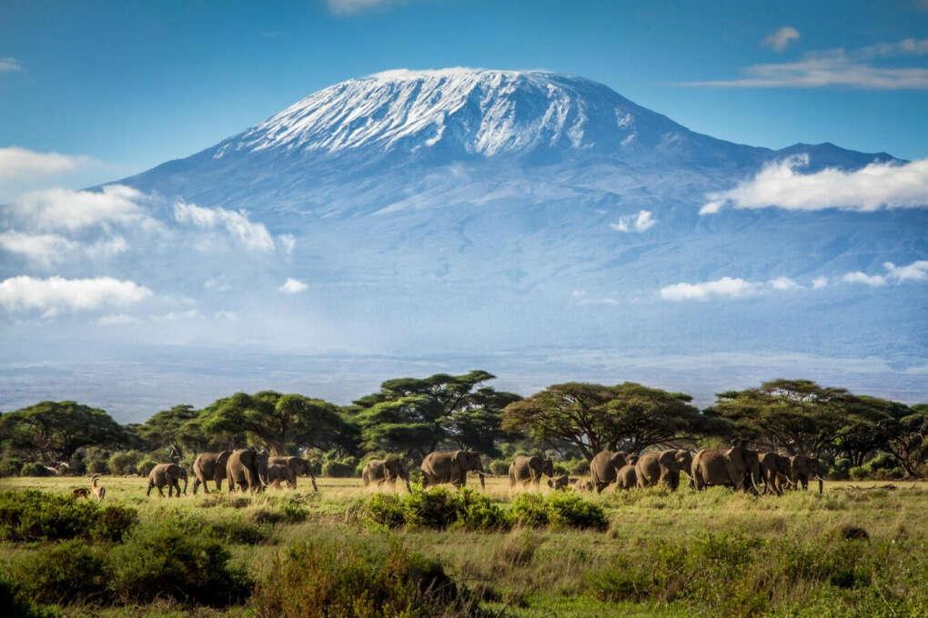 Подняться на Килиманджаро