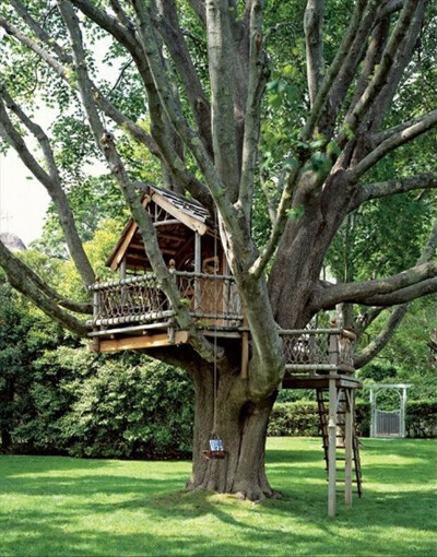 Дом на дереве.