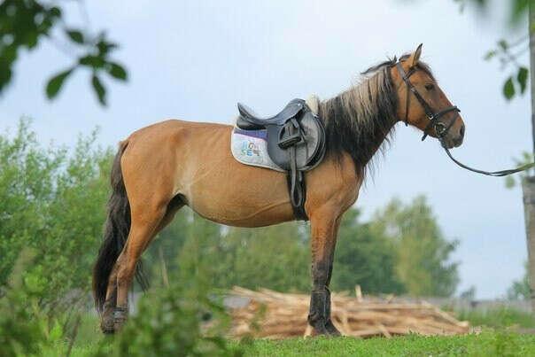 Лошадь для иппотерапии