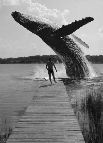 Хочу увидеть китов и услышать как они поют