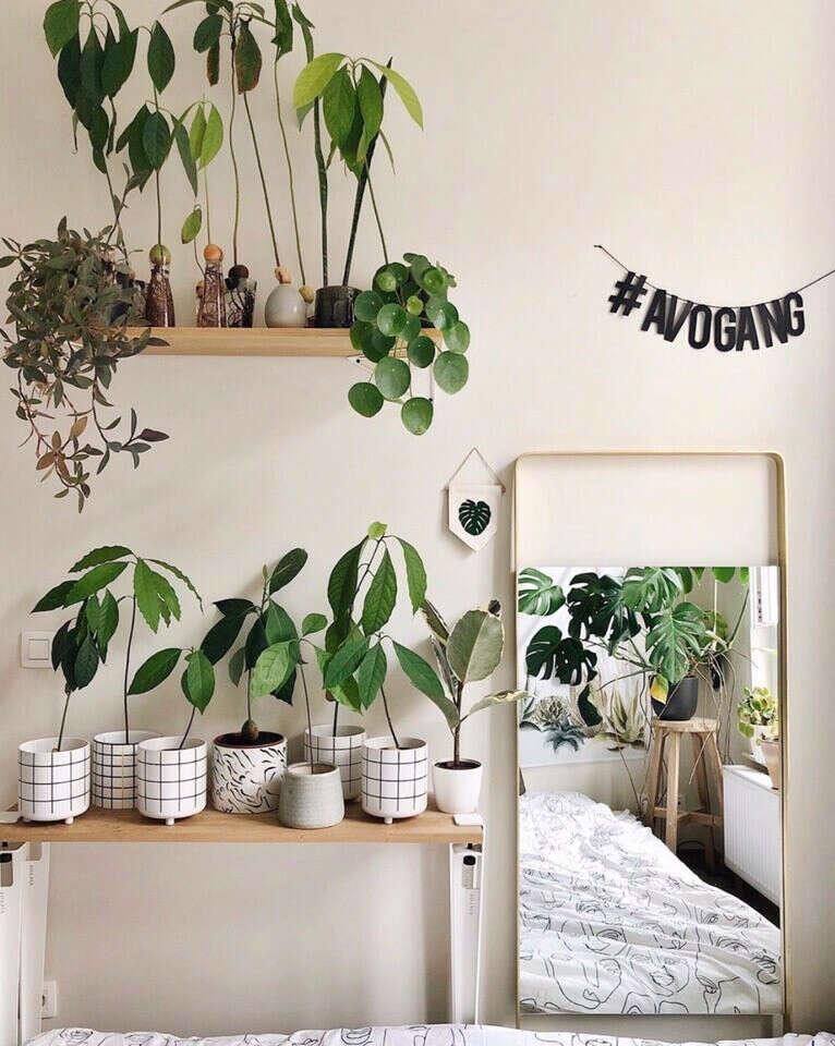 Растения в стильных кашпо