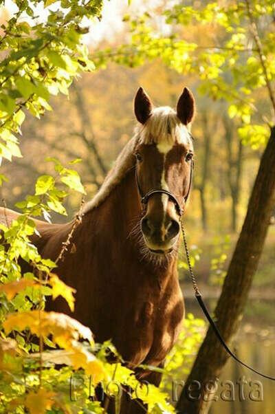 Собственная лошадь
