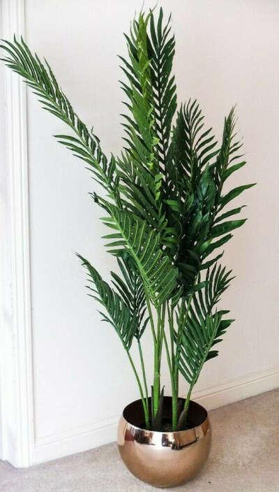 Большой куст типа пальмы