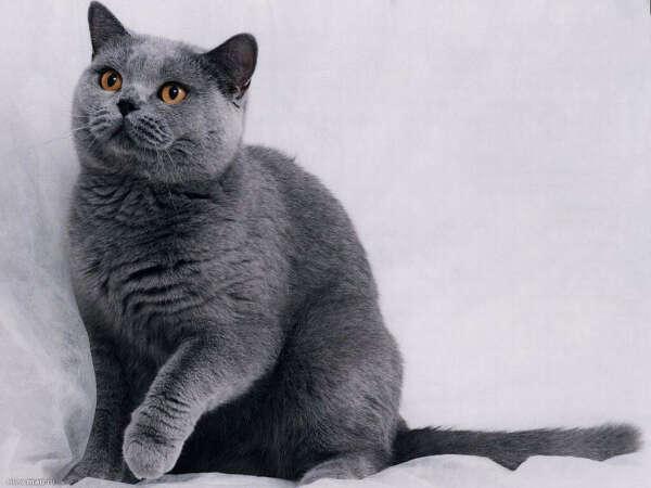 Хочу кота.