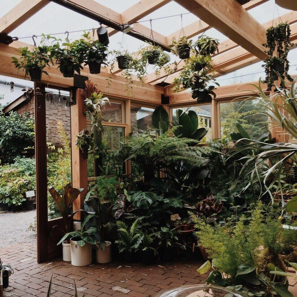 много-много комнатных растений(пальм) :)