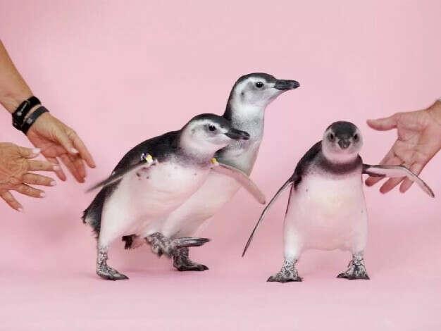 Потрогать пингвина