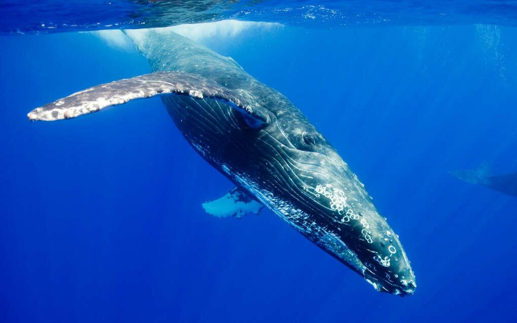 Вживую увидеть китов