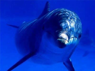 Поплавать с дельфинами в бассейне.
