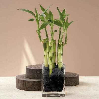 Бамбук 🐼